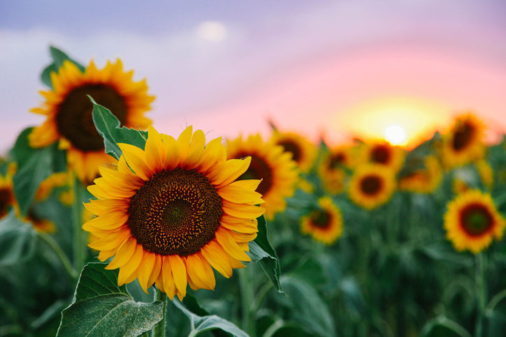 Heritage's Sponsors Inaugural Sunflower Shuffle Benefiting the HEADstrong Foundation